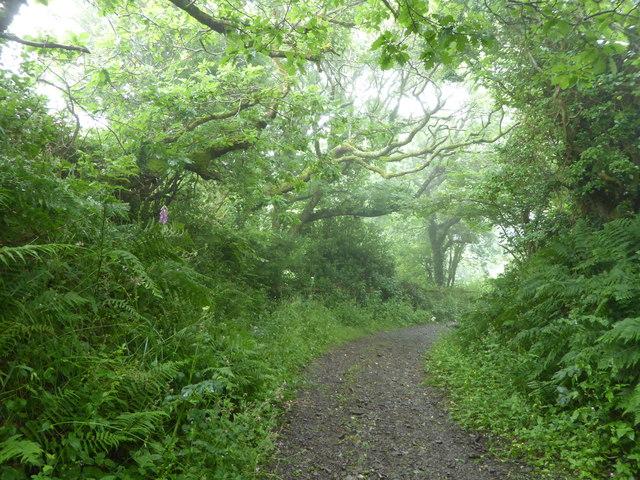 Track between Westcott Farm and Gooseham