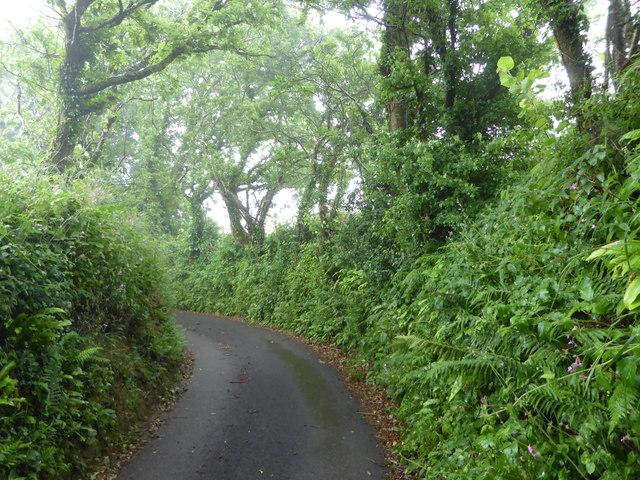 Lane between Gooseham and Gooseham Mill