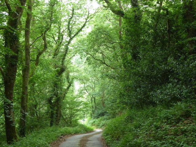 Lane between Bishop's Wood and Hustyn Wood