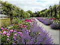 S5310 : A Fragrant Border, Mount Congreve Gardens : Week 25