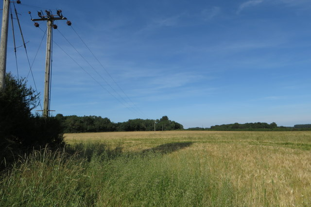 Power lines towards the Great Copse