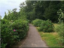 W7871 : Path at Fota by David Dixon