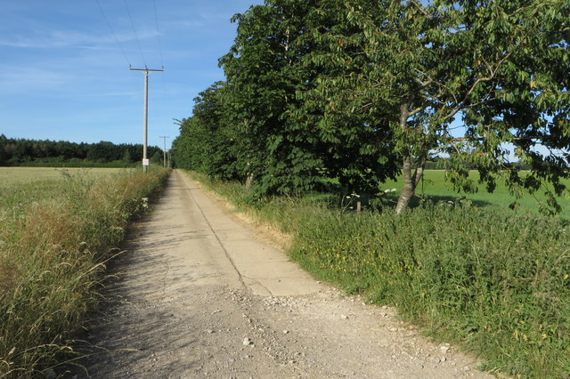 Bridleway and drive to Woodbine Cottage