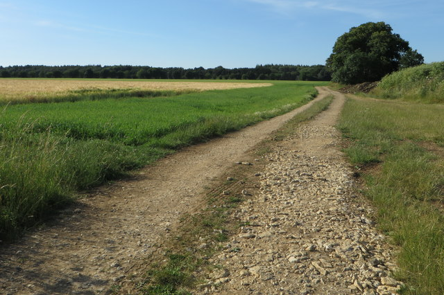 Track towards Stoke Wood