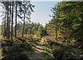 NH6838 : Forest path Inverernie Forest by valenta