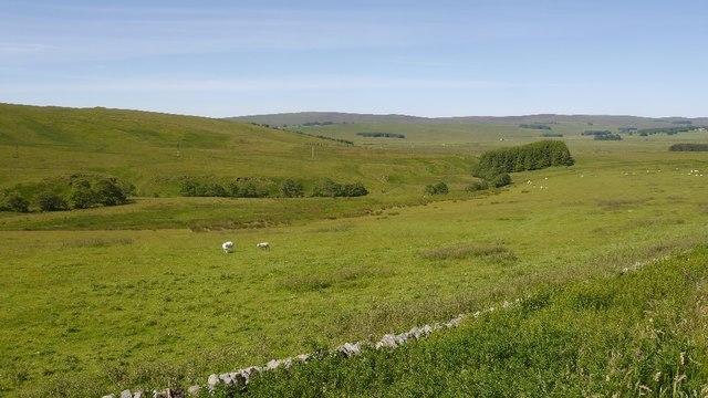 Sheep, Monkridge