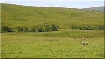NY9191 : Field, Monkridge by Richard Webb
