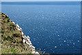 NJ8267 : Gannets in Flight by Anne Burgess