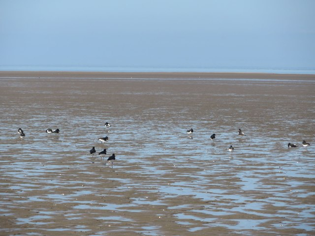 Oystercatchers on the beach at Wallasey