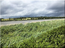 S5511 : The Banks of the Suir near Carriganore by David Dixon