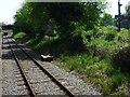 TG1001 : Current limit of passenger service, Mid-Norfolk Railway by Christine Johnstone