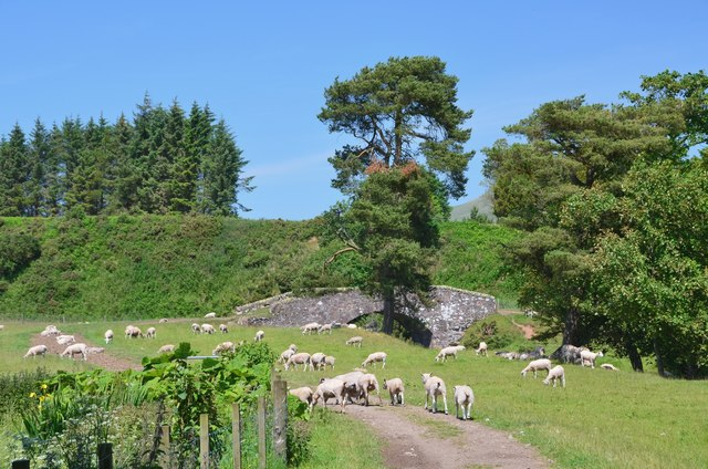 Sheep near the old bridge over the West Water