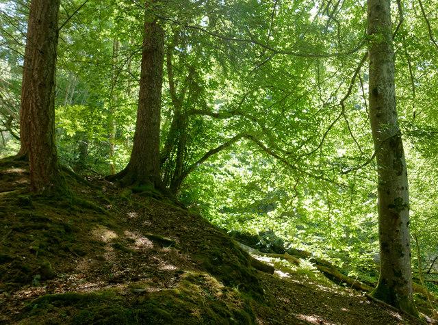 By the path through Reelig Community Woodland