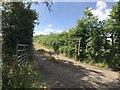 SJ8151 : Track emerging onto Bignall End Road by Jonathan Hutchins