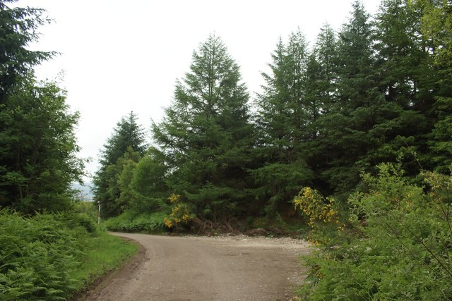 The East Highland Way in Leanachan Forest