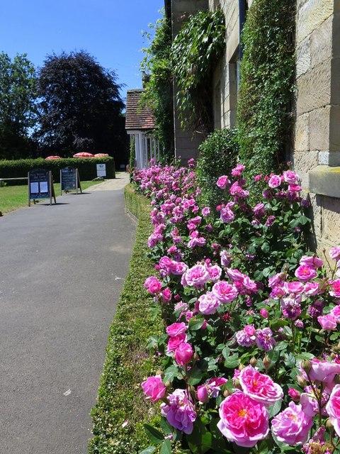 Roses at Danby Lodge