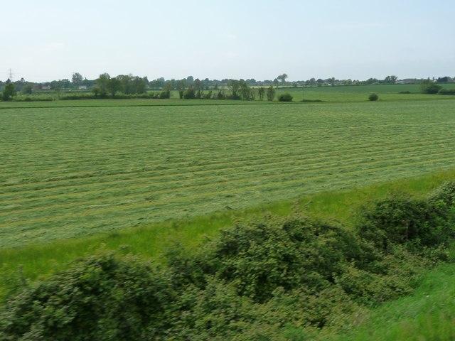 Mown field, east of Greenwood Farm