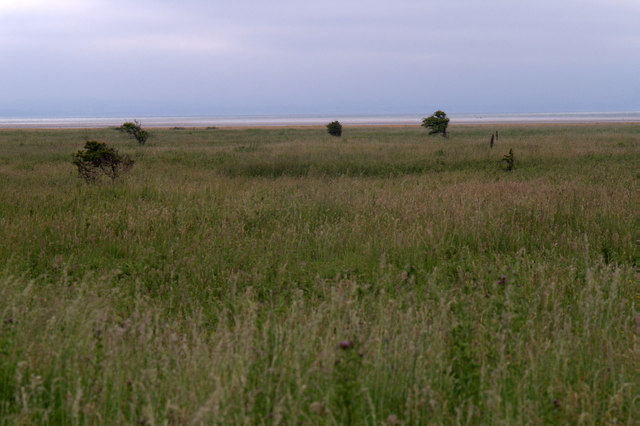 Yellow Mires, Aberlady Bay