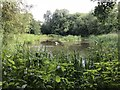 SJ8048 : Pond in Podmore Wood by Jonathan Hutchins