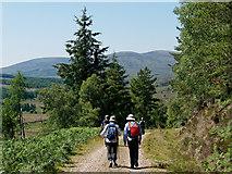 NH6877 : Descending to Strathrory by Julian Paren