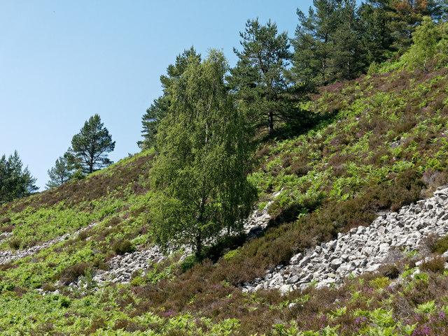 Hillside below Cnoc an Duin Hillfort