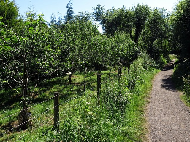 Apple orchard by Rail Trail, Beck Hole