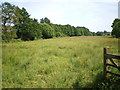 SJ8519 : Allimore Green Common by Richard Law