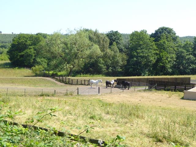 Horses at Ramshaw