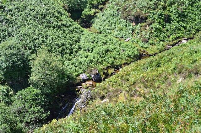 The top of Blackburn Falls