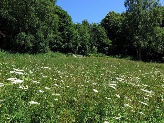 Wildflowers, Hardwick Hall Country Park