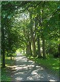 SE2954 : Valley Gardens, Harrogate by Derek Harper