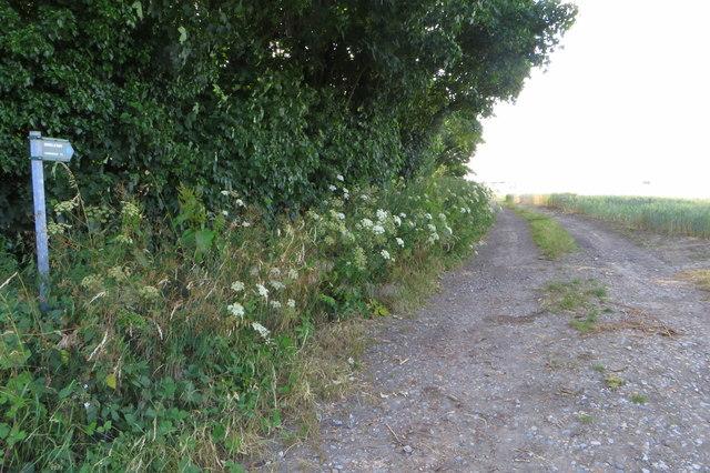Bridleway to Hardwick