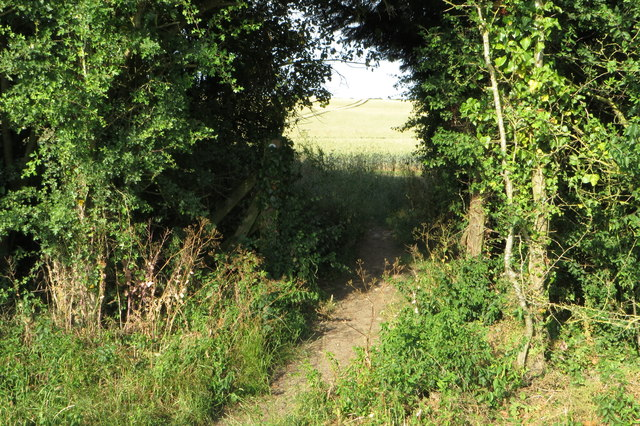 Bridleway goes through the hedge