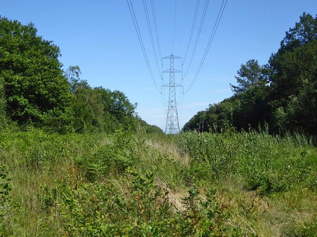 Power line through Clowes Wood