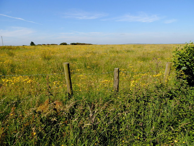 Grass field with buttercups and ragwort, Drumnahoe by Kenneth  Allen