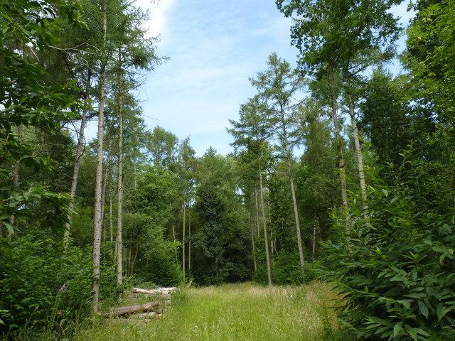 Dean's Wood, Haye Lane, Hadley