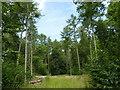 SO8564 : Dean's Wood, Haye Lane, Hadley by Jeff Gogarty