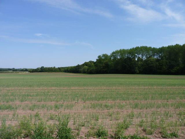 Edge of Dean's Wood, Hadley