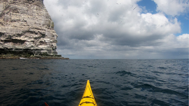 Gannets fill the air at Noup of Noss