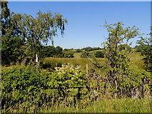 H4963 : Seskinore Townland by Kenneth  Allen