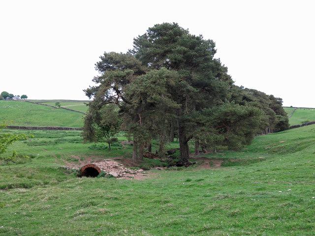 Rough pastures and woodland around Honeycrook Burn
