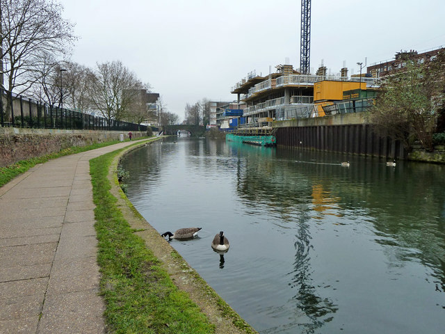 Canada Geese, Regent's Canal