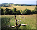 SU8199 : View from Callows Hill by Des Blenkinsopp