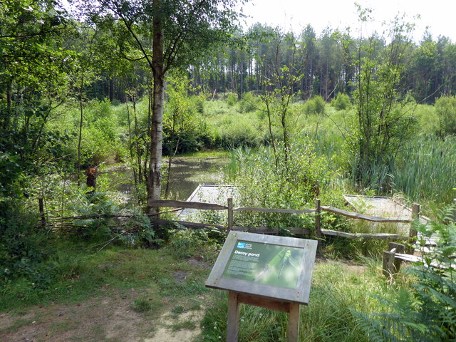Decoy Pond, RSPB Broadwater Warren