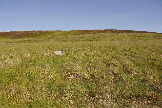 Moors north of Sundaysight