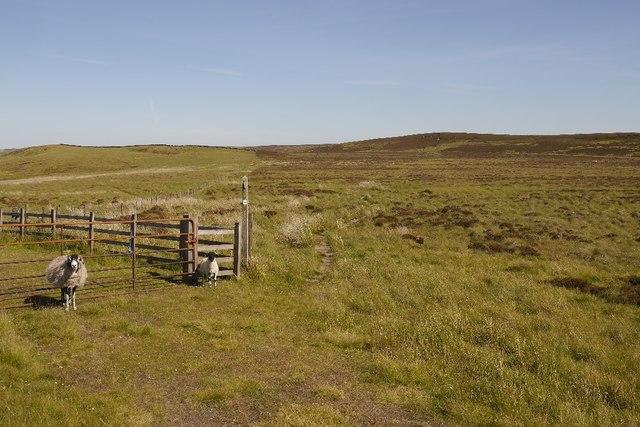 Ewe and lamb on the Pennine Way