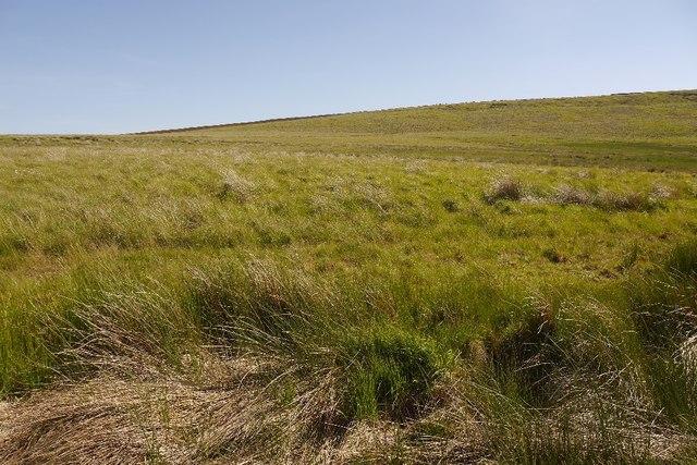 Moorland on Whitley Pike