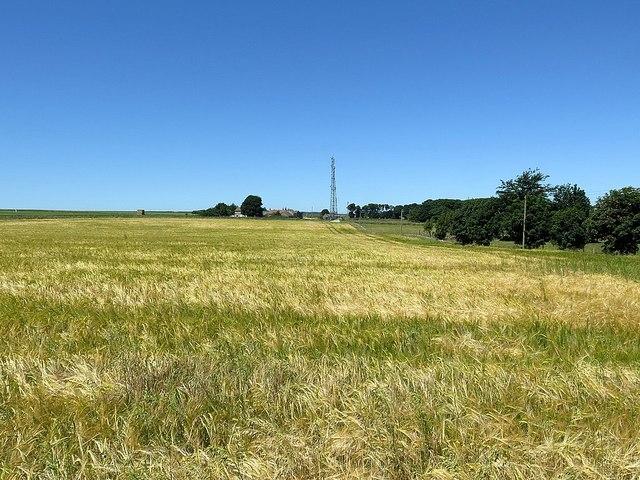 Barley field near Hambleton High House