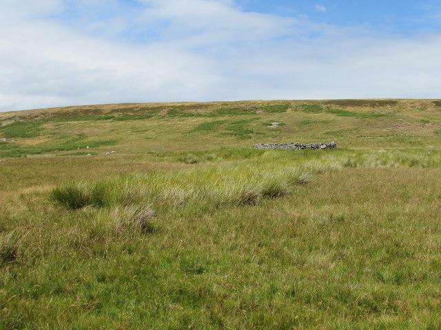 Sheep Fold below Baxton Knab