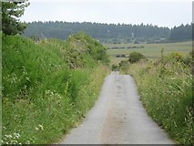 NJ5703 : Road down to the Brankholm Burn by Stanley Howe